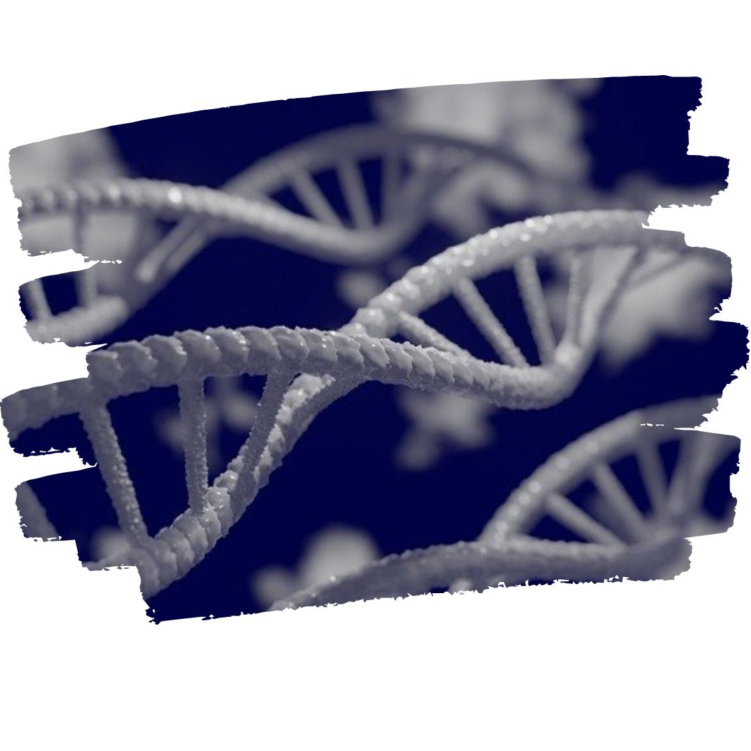 A propos ADN