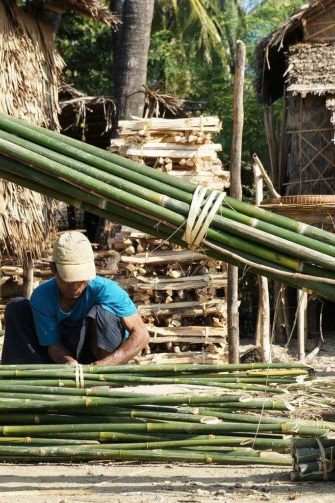 usine de bambou